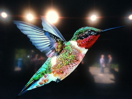 Hummingbird and the Future of SEO and Link Building